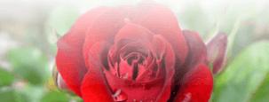 Blumen verschicken zum Frauentag