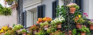 Balkonpflanzen im Sommer