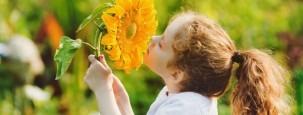 Ein Kind riecht an einer Sonnenblume