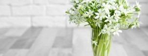 Milchstern, Ornithogalum - Blumenstrauß