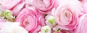 Ranunkel Bedeutung Herkunft Blütezeit