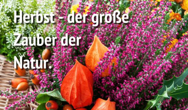 Blumensträuße von Blumenversand Edelweiß