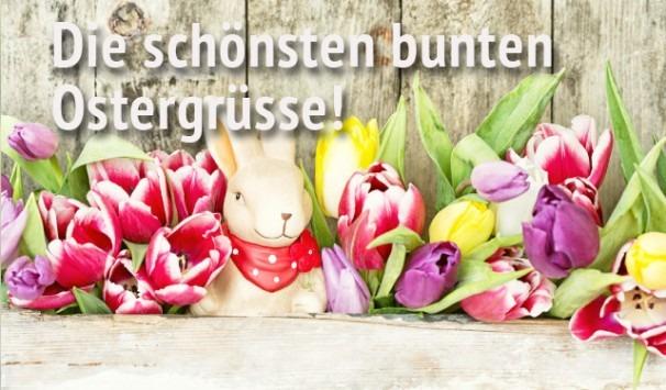 Osterhase zwischen bunten Tulpen