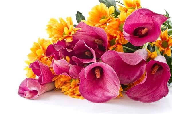 Gemeinsame Calla Bedeutung| Blumenversand Edelweiß &QF_69