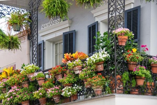 Balkonpflanzen Im Sommer Blumenversand Edelweiss