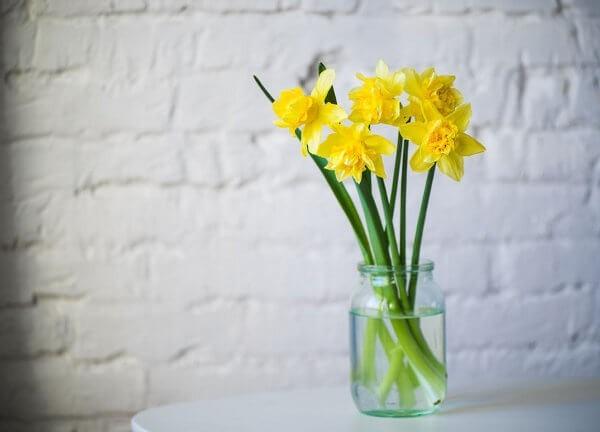 Bedeutung der Blume Narzisse
