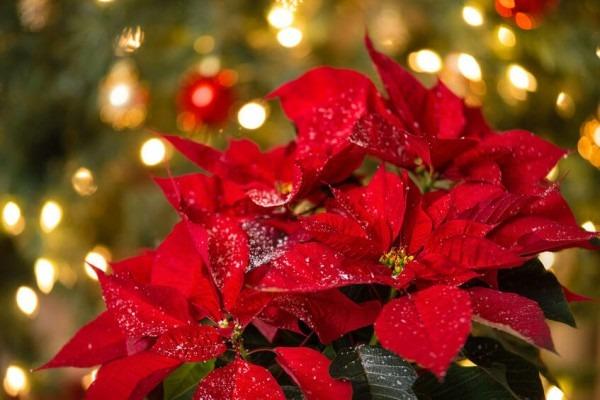 Blumendeko zu Weihnachten