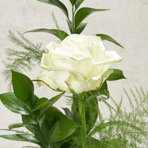 weiße rose symbol trauer