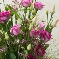 Eustoma lila